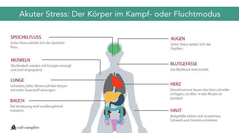 Kurzfristige Reaktionen des Körpers auf Stress