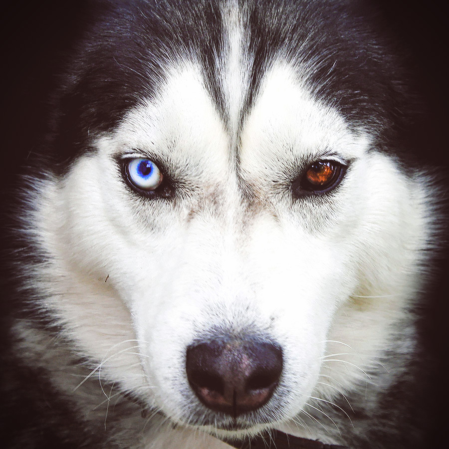 HUSKY Methode